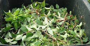 Ramassage mensuel des déchets verts