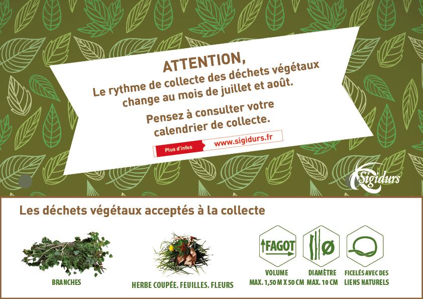 Collecte des déchets végétaux en période estivale