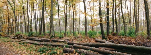 Forêt domaniale de Montmorency: Info coupe